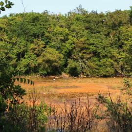 Kleines Sumpfgebiet kurz vorm Strand